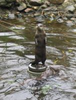 Throw a fish, sayd the otter by Tap-Photo-and-Co