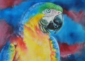 Macaw by k8lag