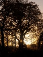 Sunset through trees by Graid