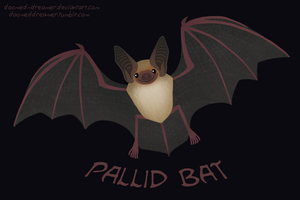 Pallid Bat by Doomed-Dreamer