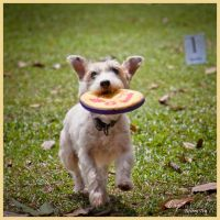 Frisbee Fun by PoodleSchmoodle