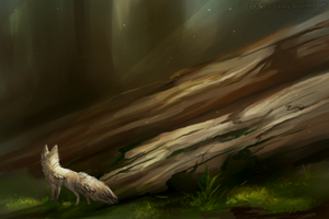 of fallen trees by Peace-Colby