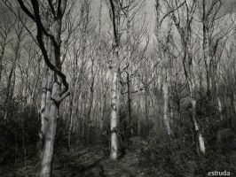 The Mysterious Forest by Estruda