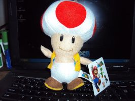 Toad Plush by DazzyDrawingN2