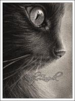 Daydreaming Cat ACEO by Zindy