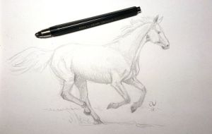 Sketch of a Horse, of course. by Wideen