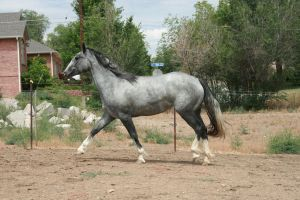 Blue Roan Stock 80 by tragedyseen