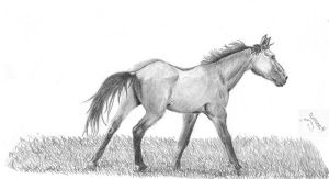 Running Quarter Horse by budhorse4
