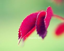 Red Summer by chartreuseeyes89
