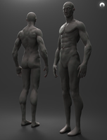 Male Anatomy FREE Download by fumanshooh