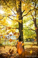 Yellow Leaves are Falling... by confucius-zero