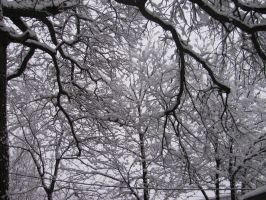 White Branches by Shadow-in-teh-Night6
