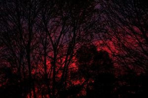 Those Bloody Trees by PlutoHasCows