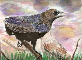 Ravens-Water Color by neecolette