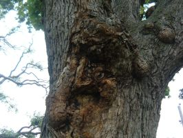 Deformed Tree 3 by Rice-Puppy