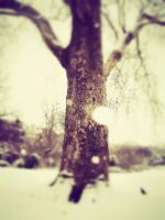 *Snowy tree in Paris* EDITED by OwlsomeArts