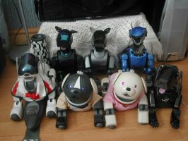 My Aibo Pack so far by melliepup
