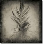 Feather... by ansdesign