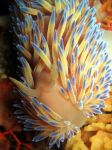 Gas Flame nudi by Fluggs
