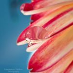 53. Waterdrop by FrancescaDelfino