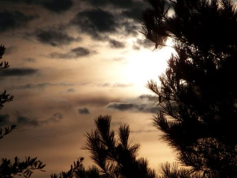 Sunset In The Pines by JoAnneVance