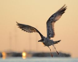Flying by corsuse