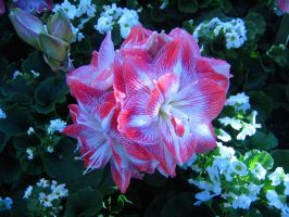 Longwood Gardens: 20 by jr----fave-resources
