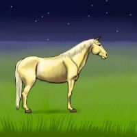 Palomino:D by Lolilith