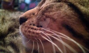 Whiskers by tattooed-psychosis