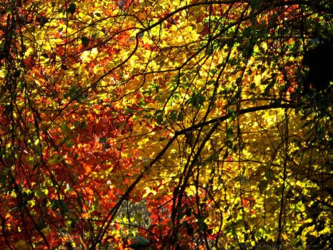 ShadeOfColors-AWD by AWDesignsPhotography