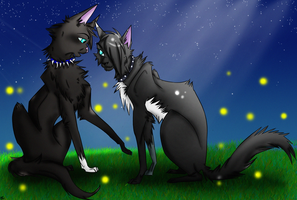 Commision-Scourge+Midnightclaw by AmeliaWolfe