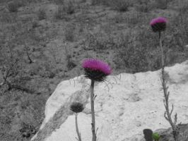 Weeded Purple Flower Black and White by RockinPyroGal