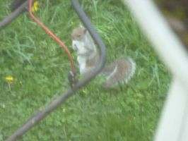 Squirrel with Lawnmower by LW-Lucy