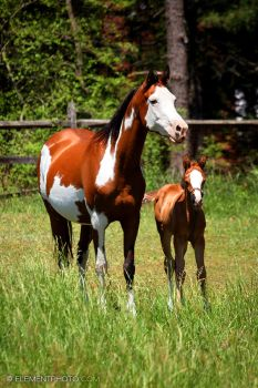 bay paint arab and foal by venomxbaby