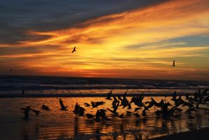Ocean sunrise and seagulls that I scared. by beanphotogi