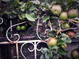 Just Some Apples And A Gate by MrsPhotoshopkilla