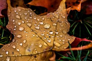 Wet Leaves III by redwolf518