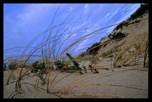 Beach Grass by MalcomX