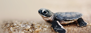 Turtle FB Cover ( Bing Background Image ) by LMA-Design
