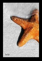 Golden Starfish by Juliejxk
