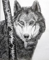 Wolf with my pen by curryQ