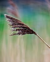Blowing in the wind by AdrianSadlier