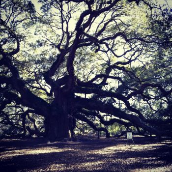 Angel Oak by Horsegirl558
