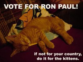 Kittens for Ron Paul by alostrael444