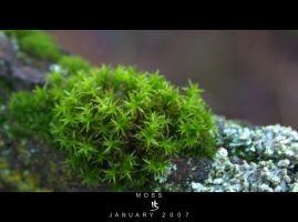 MOSS by science10