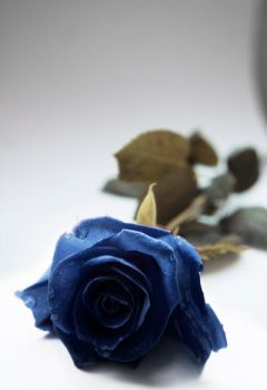 Blue Rose by UntamedUnwanted