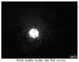 Dark leafes under the fullmoon by migtoons
