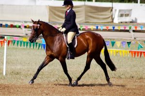 Show bay extended trt ridden by Chunga-Stock