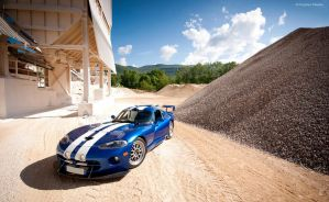Beware of the Viper by Charles-Hopfner
