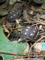 Mom's turtles 2 by firagare